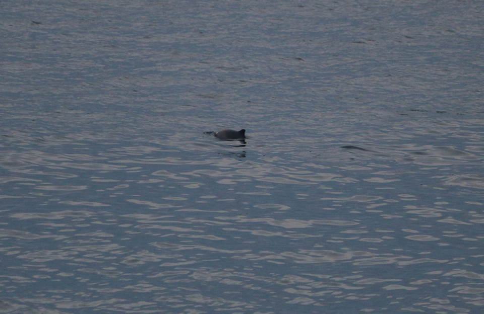 North Sea blog WK 12 harbour porpoise