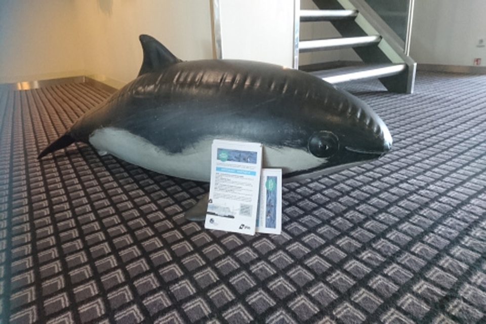 Harry the harbour porpoise - the North Sea mascot!