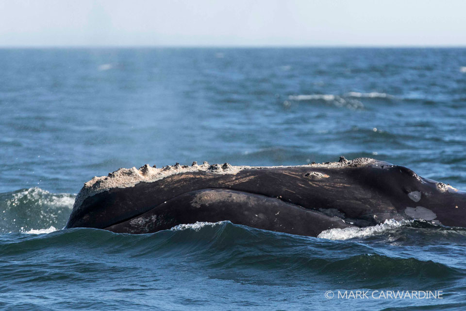 Fisheries closed in response to North Atlantic right whale sightings